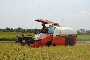 Tranh thủ xả nước vào đồng ở những ô bao đã thu hoạch lúa