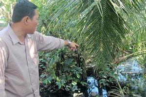 Chủ quán cơm Kiều Giang bị xử phạt vì gây ô nhiễm môi trường