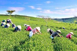 Xuất khẩu nông sản trong CPTPP: Cạnh tranh là động lực đổi mới