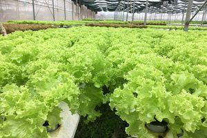 Đảm bảo VSATTP trong sản xuất nông sản