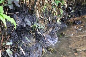 Nước sạch ở Hà Nội nghi nhiễm dầu