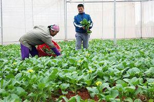 Hòa Bình phát triển Ðảng trong doanh nghiệp ngoài khu vực nhà nước