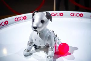 Ngó chú chó aibo, tâm điểm sự chú ý Sony Show 2019, giá 3.000 USD