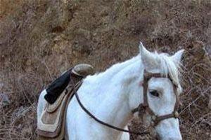 Số phận bi thảm của chú ngựa Bạch Long trong Tây Du Ký