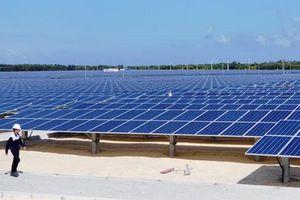 Bình Định thu hồi dự án điện mặt trời công suất 100MW của Tập đoàn Ấn Độ