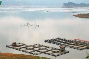 Đảng viên là 'đầu tàu' trong nuôi cá lồng ở lòng hồ thủy điện Sơn La