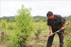Anh nông dân truyền cảm hứng cho mọi người sản xuất nông nghiệp sạch
