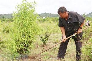 Tiên phong sản xuất sạch trên vùng đất khó