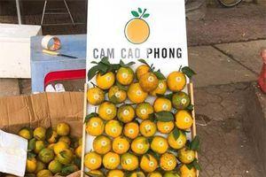 Hòa Bình: Cam Cao Phong đầu mùa giá 30.000 đồng/kg