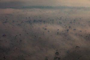 Ngọn lửa bốc mùi tiền đang đốt cháy rừng Amazon