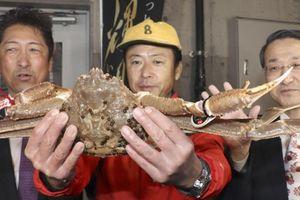 46.000 USD cho một con cua tuyết ở Nhật Bản