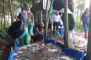Đổi mới cách thức nuôi trồng thủy sản vùng cao
