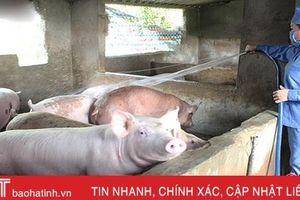 Giá lợn hơi tăng 'phi mã', nhiều trang trại lớn ở Hà Tĩnh chờ 'hốt bạc'!