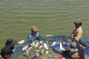 Bán thủy sản sang Trung Quốc qua kênh trung gian, tại sao không?