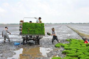 Đẩy mạnh cơ giới hóa gieo sạ lúa