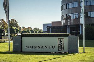 Monsanto chịu phạt 10 triệu USD vì sử dụng thuốc trừ sâu độc hại
