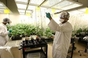 Tập đoàn Monsanto thừa nhận dùng chất cấm trong thuốc trừ sâu