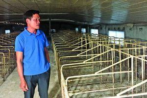 Giữa 'tâm bão' dịch tả lợn châu Phi, hộ chăn nuôi quay cuồng tìm lối thoát