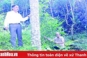 Huyện Lang Chánh đẩy mạnh phát triển kinh tế rừng