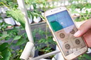 Khu vườn công nghệ cao, có thể chăm bón từ xa bằng ứng dụng điện thoại
