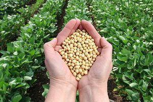 Thị trường hàng hóa tuần từ 18/11 – 22/11: Áp lực nguồn cung đè nông sản, chuyển biến xấu đàm phán Mỹ - Trung khiến giá kim loại tăng