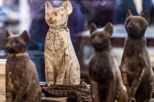 Ai Cập phát hiện xác ướp mèo và cá sấu trong ngôi mộ cổ