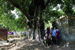Bảo tồn cây di sản-Hình thức bảo tồn đa dạng sinh học hiệu quả