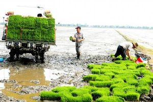 Thúc đẩy cơ giới hóa trong gieo cấy lúa