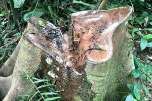 Xem xét trách nhiệm của tập thể, cá nhân để xảy ra phá rừng