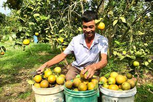 Hoành Bồ tái cơ cấu kinh tế nông nghiệp: Nâng cao giá trị, phát triển bền vững
