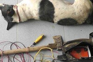 Cảnh sát giao thông tuần tra bắt giữ kẻ trộm chó