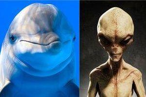 NASA thực hiện thí nghiệm với cá heo là để nói chuyện với người ngoài hành tinh?