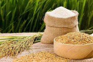Chống nạn giống giả bào mòn danh tiếng gạo Việt