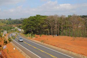 Rừng thông bên quốc lộ bị bức tử