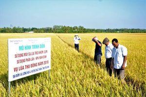 Cơ giới hóa tăng 48% lợi nhuận sản xuất lúa