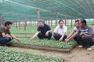 Hiệu quả từ mô hình trồng dược liệu dưới tán rừng