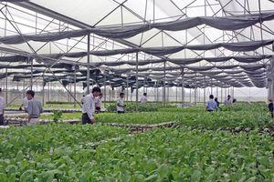 Quảng Yên: Hiệu quả ứng dụng KHCN trong lĩnh vực nông nghiệp