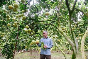 Vĩnh Phúc đẩy mạnh Chương trình Khuyến nông tỉnh giai đoạn 2020-2025