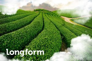 Hành trình từ 'đệ nhất danh trà' thành điểm đến độc lạ của Thái Nguyên