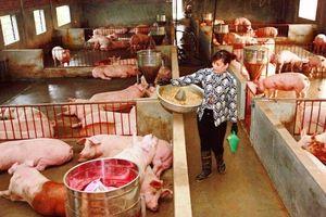 Chỉ 5,8% trang trại tại Hà Nội được Bộ Nông nghiệp và Phát triển nông thôn chứng nhận