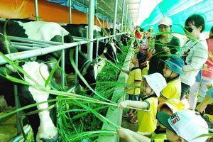 Khơi thông tiềm năng du lịch nông nghiệp