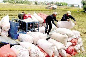 Bộ Công Thương tích cực xúc tiến thương mại mặt hàng gạo