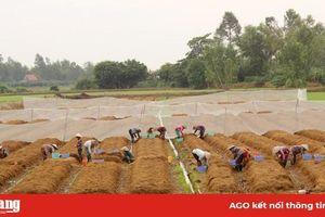 Hiệu quả ứng dụng công nghệ sinh học trong sản xuất nông nghiệp