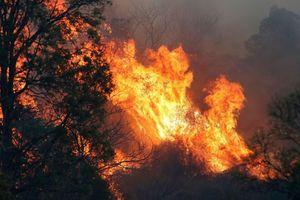 Hai lính cứu hỏa thiệt mạng trong thảm hỏa cháy rừng tại Australia