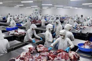 Ấn Độ loay hoay tìm thị trường thịt trâu
