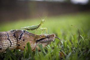 Ảnh động vật: Cá sấu ăn thịt đồng loại tàn khốc