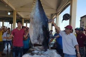 Phú Yên đầu tư mạnh cho kinh tế biển