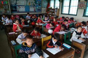 Có cần cắt hợp đồng giáo viên để chờ xét tuyển đặc cách biên chế?