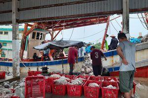 Tham quan cảng cá Tắc Cậu, Kiên Giang