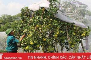 Lấy 16 mẫu cam, 100% không tồn dư thuốc bảo vệ thực vật